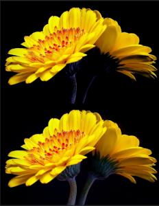 مد CMYK و تغییرات روی تصویر